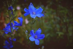 Top 55 Beautiful Types of Blue Flowers That You Should Know