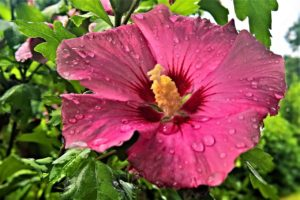 Top 8 Flowers of Hawaii and Their Meanings