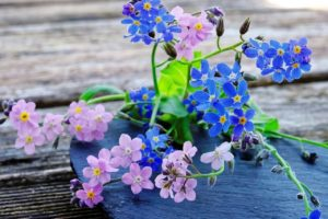 Forget Me Not Flower Meaning and Symbolism