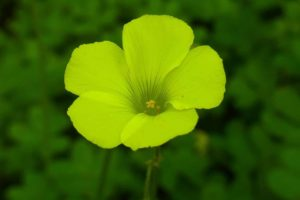 Top 21 Green Flowers That Look Amazing