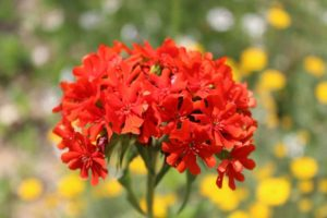 Top 60 Summer Flowers to Plant for a Spectacular Garden