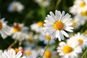 12 Months Of Birth Flowers: Origins, Meanings and Symbolism