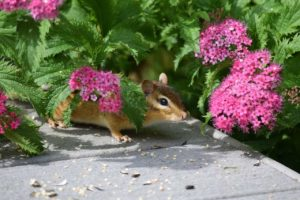 9 Best Squirrel Resistant Flowers You Can Grow To Protect Your Garden