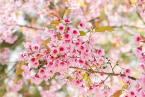 60 Flowering Plants for a Colorful Winter Bloom