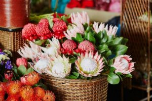 Proteas: Common Flower Varieties, Meaning and Growing Tips